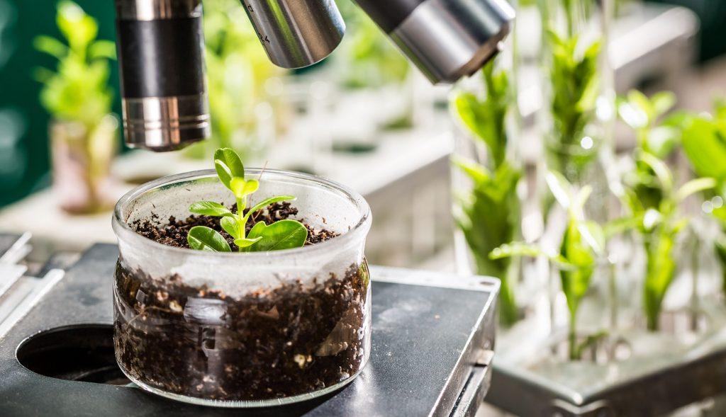 לראשונה מחקר מוכיח קשר בין הפחתת הסיכון לסרטן לבין צריכת מזון אורגני - הארגון לחקלאות אורגנית וביולוגית