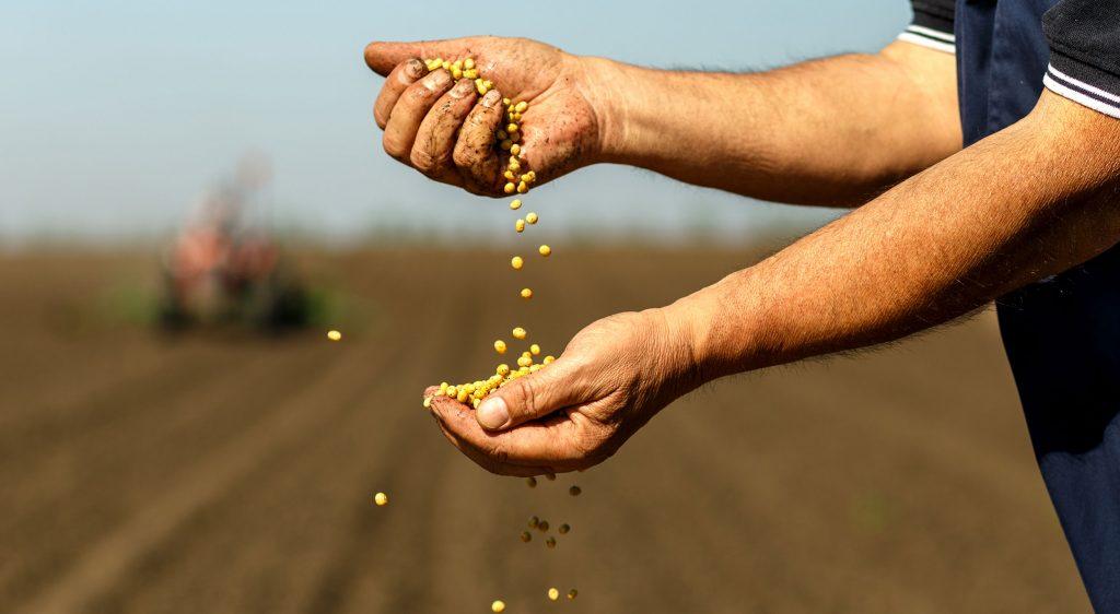 מאמר חקלאות אורגנית - מריו לוי - הארגון לחקלאות אורגנית