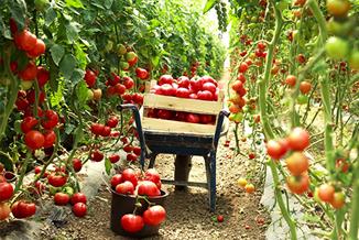 יסודות החקלאות האורגנית - הארגון לחקלאות אורגנית